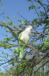 Mark in our apple tree.