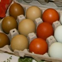 Oliver eggs in one basket