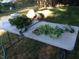harvest station setup
