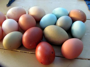 Lots of new egg colors
