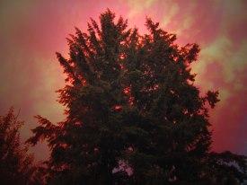 Wildfire smoke at sunset.