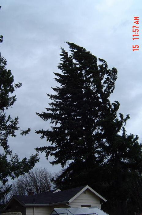 Windstorm06